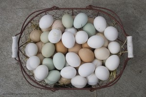 these-are-not-factory-farm-eggs-by-woodleywonderworks.jpg