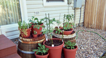 Vegetable Container Gardening Ideas: How To Get Started …And Get Free Seeds!