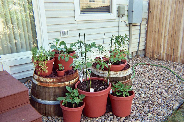 Vegetable container gardening ideas how to get started for Food garden ideas